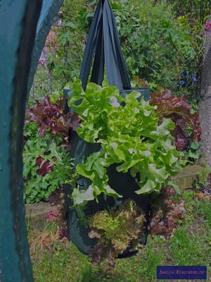 Gemüse im Pflanzbeutel